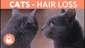 cat hair loss causes treatment