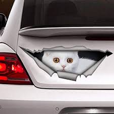 Amazon Com White Scottish Fold Decal White Cat Car Decal Vinyl Sticker For Cars Windows Walls Fridge Toilet And More 11 Inch Home Kitchen