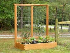How To Build A Trellis For Growing Peas How Tos Diy