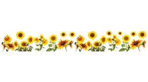 Wallpops Sunflowers Border Wall Decal Reviews Wayfair