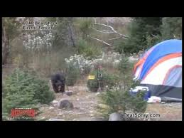 Black Bear Zapped By Udap Bear Shock Electric Fence For Food Storage Youtube