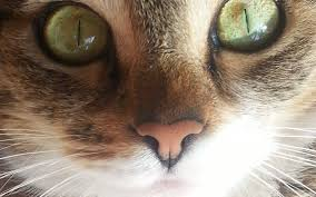 how to cure bad breath in your cat