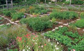 kitchen garden can t be beautiful