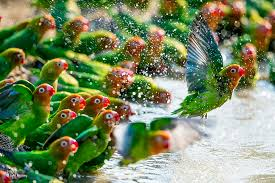hd wallpaper water drops parrot