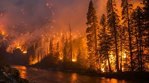 How Wildfires Are Polluting Rivers and Threatening Water Supplies ...