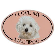 Oval Dog Breed Picture Car Magnet I Love My Maltipoo Magnetic Bumper Sticker Walmart Com Walmart Com