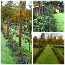 fruit trees underplanted with lavender