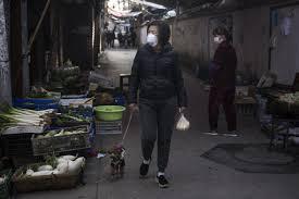 Coronavirus in Cina: cani e gatti gettati dalle finestre e abbandonati