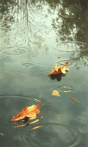 free leaf in rain live wallpaper apk