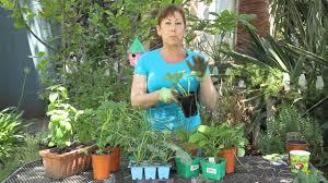 summer vegetable garden planting for