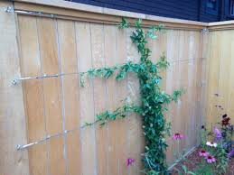 Easy Way To Train Twining Vine Plants On Walls Fences And Flat Surfaces Garden Vines Plant Wall Climbing Plants Fence