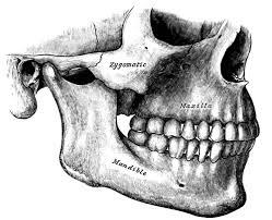 jaw surgery for correcting alignment