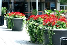 ance outdoor potted plants