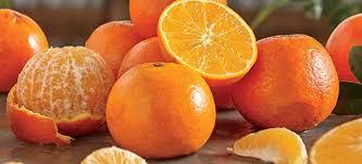 when to oranges in florida farm