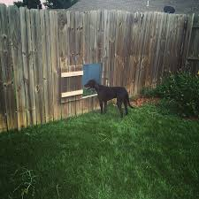 Doggy Door In Fence To Neighbors So Dogs Can Play Dog Fence Dog Door Dog Gate