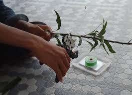 most used gardening tools in garden