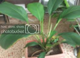 Top 10 Cheap House Plants In The Philippines Collectors Connection