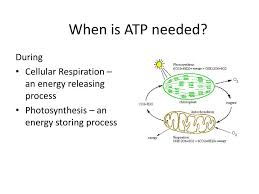 ppt when is atp needed powerpoint