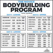 the novice bodybuilding program