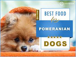 8 best pomeranian dog foods for