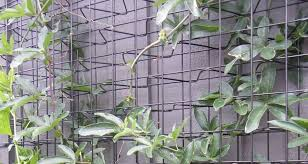 Climber Trellis Mesh Is Used In Indoor Or Outdoor For Beautiful Reason