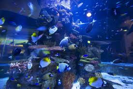 Image result for zoo and aquarium