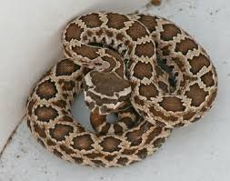 San Diego Snake Fencing Installers Snake Control Rattlesnake Trapping Venomous Snake Removal Snake Animal Control Done Right