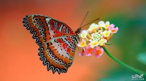 صور فراشات جميلة فرشات بالوان غريبه صور احلى فرشات بالعالم