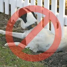 Dig Proofer Kit For Preventing Digging Under Fence Dog Proofer