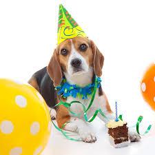 Como Organizar Una Fiesta De Cumpleanos Para Tu Perro