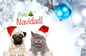 Tarjetas De Cumpleanos Y Navidad Para Enviar Por Correo 4 Hd Wallpapers Tarjetas De Navidad Gratis Tarjetas De Cumpleanos Tarjetas
