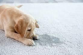 how to make homemade carpet deodorizer