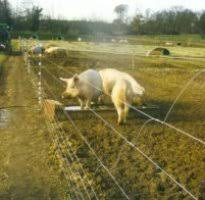 Effective Movable Pig Fencing