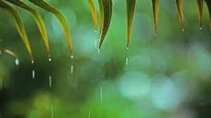 relaxing soft rain sounds