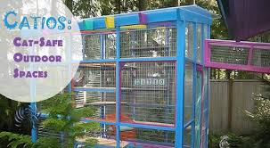 Catios Cat Safe Outdoor Enrichment For Your Indoor Kitty Msah Metairie Small Animal Hospital New Orleans La