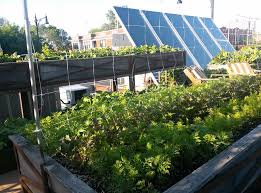 rooftop vegetable garden ideas and