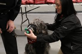 Middletown Township Fire Department Receives Donation Of 11 Sets Of Pet Oxygen Masks From Canine Company Atlantic Highlands Herald