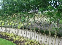 Living Fences How To Make A Living Fence For Your Garden Eco Snippets