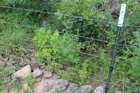 Fencing For Boer Goats And Meat Goats Critter Ridge