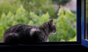 Darmowe Zdjęcia : kot, fauna, koty, wąsy, zwierzęta, kręgowiec ...