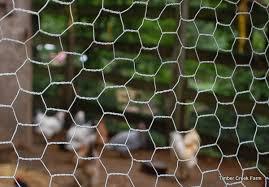 Chicken Fences Chicken Wire Vs Hardware Cloth Backyard Poultry