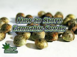 How to Store Cannabis Seeds - Percys Grow Room