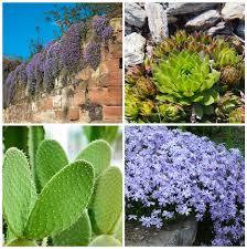 10 plants that grow on rocks garden