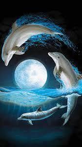 Las 140 mejores imágenes de Imágenes de delfines | Delfines ...