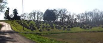 Harrison Cemetery Burials in Franklin County Illinois