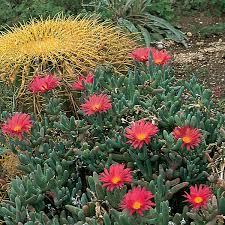 landscape plants for the arizona desert