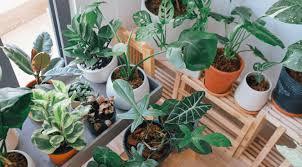 why aren t my indoor plants growing