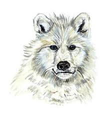 Melville Island Arctic White Wolf Fox Portrait Auto Boat Rv Vinyl Decal Sticker Ebay