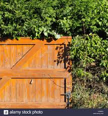 Orange Painted Wooden Fence Door With Rural Evergreen Plants Hedge In Stock Photo Alamy