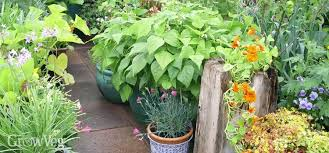 cram more into your city vegetable garden